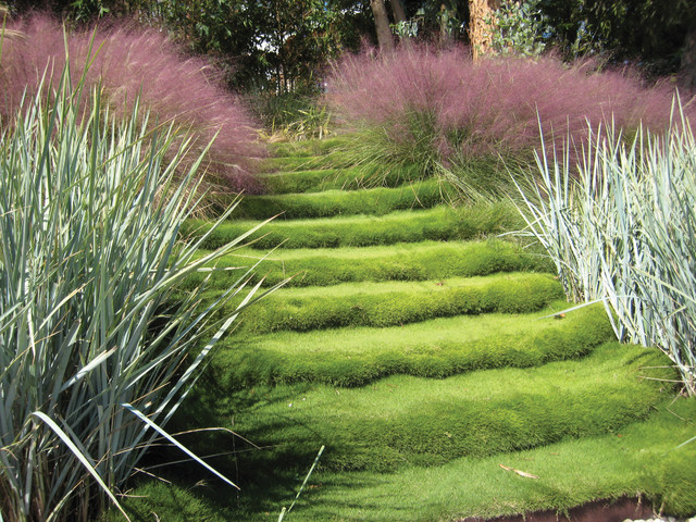 Fake Grass Cost Landscape Contemporary with Grass Grass Step Grass Steps Landscape Lawn Ornamental Grass