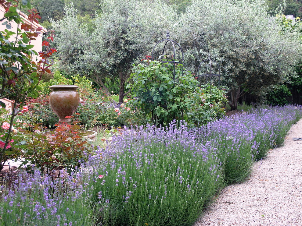 heady bed Landscape Traditional with grass gravel driveway gravel path gravel pathway