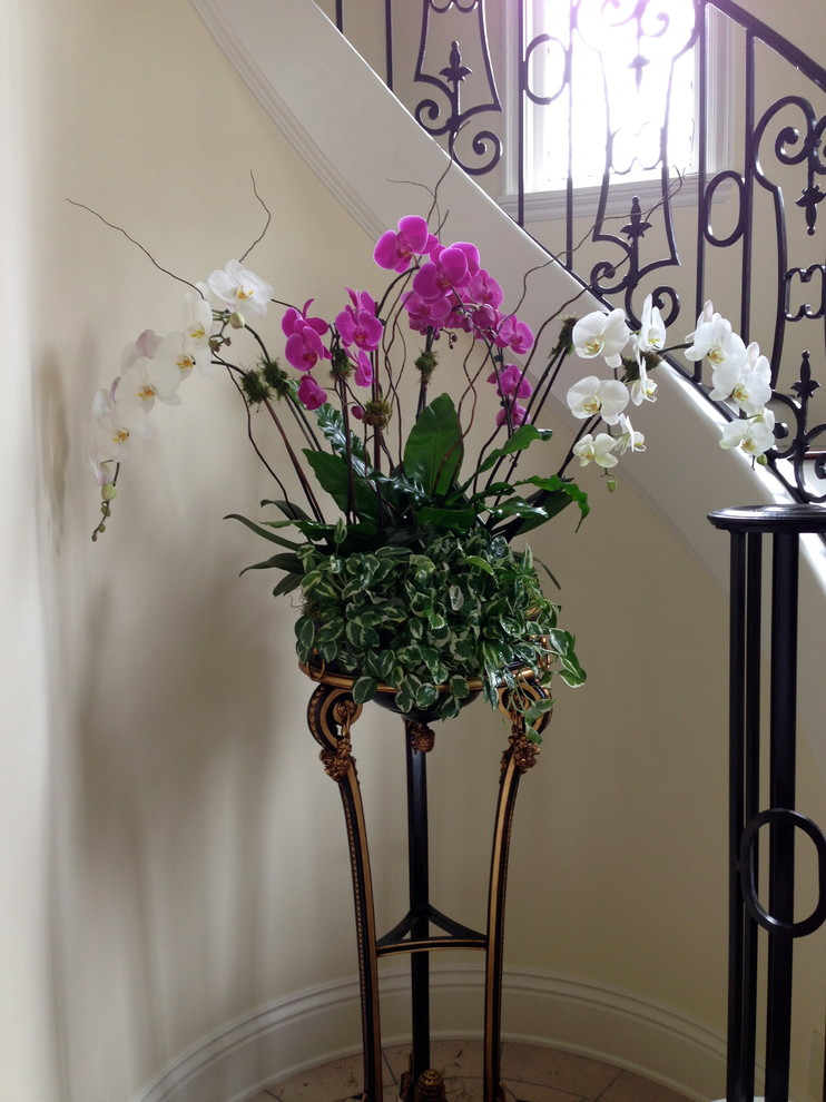 Orchid Arrangements Landscape Traditional with Indoor Plants Interior Landscaping Interior Plants Orchids
