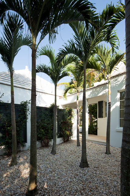 Artificial Palm Trees Landscape Tropical with Black Shutters Courtyard Dark