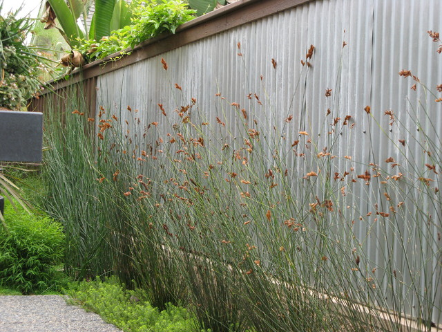 Bamboo Fence Panels Landscape Contemporary with Border Plantings Corrugated Metal